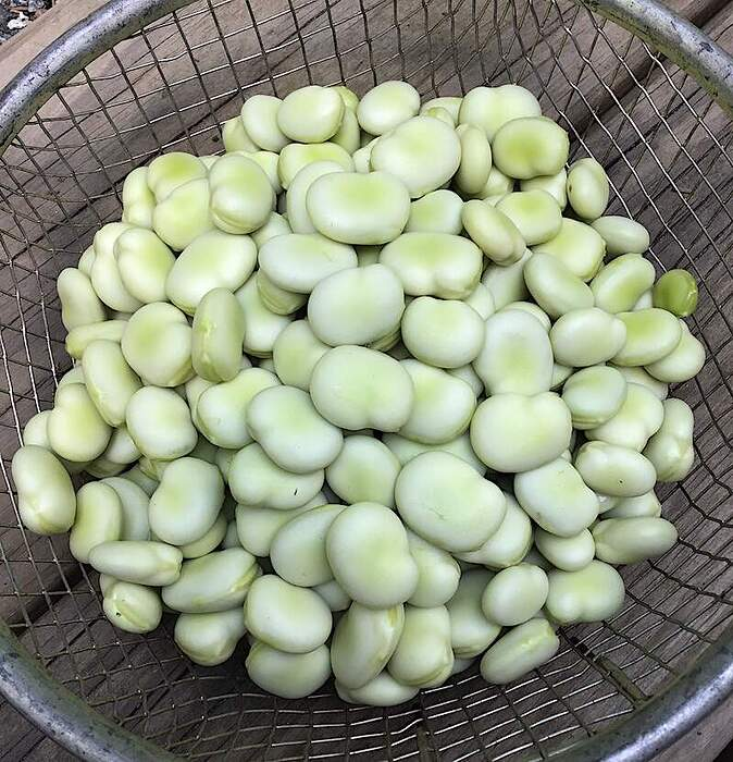 favabeans