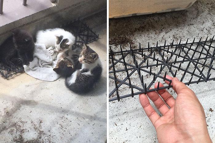 cats-build-resistance-deterring-spikes-japan-13-58528d9088c54__700
